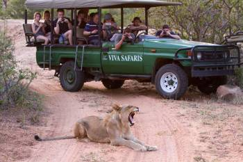 Lucky guests on a game drive with Viva Safaris