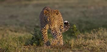 Take Me To Africa Ltd Photo