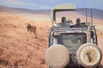 Born Free Safaris Photo