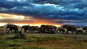 African Hartebeest Safaris Photo