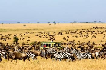 Oasis Safaris Photo