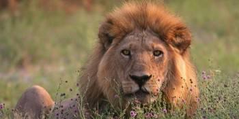 African Savanna Travel Photo