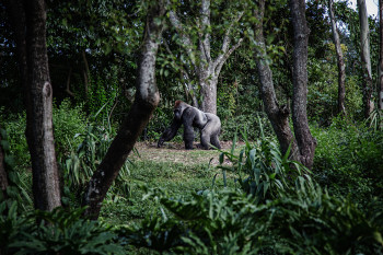Silverback Expeditions Photo