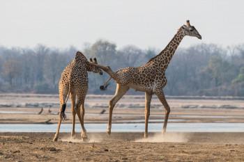 Absolute Zambia Safaris Photo