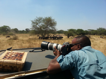 Our team leader is taking wildlife photos