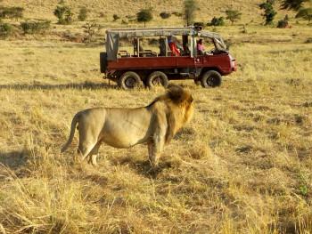 Skylane Safaris Ltd Photo