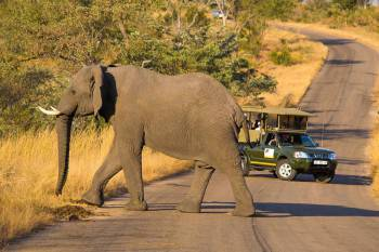 Game Drive in Kruger National Park - South Africa