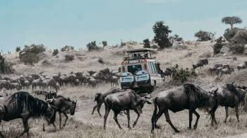 Seven Wonders Safaris Photo
