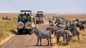 Safari Ventures