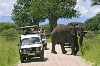 Tanzania wildife safaris