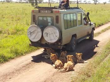 Safari360 Photo