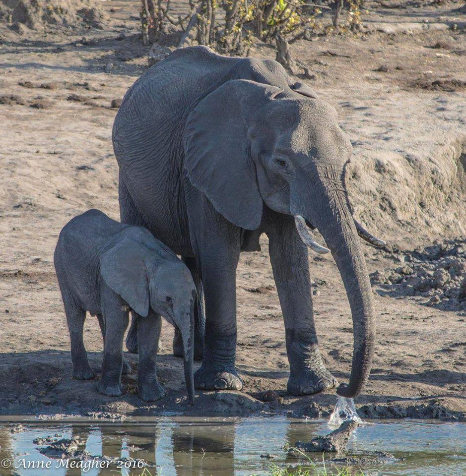 Expert Rating Reviews >> Okavango Delta – Travel Guide, Map & More!
