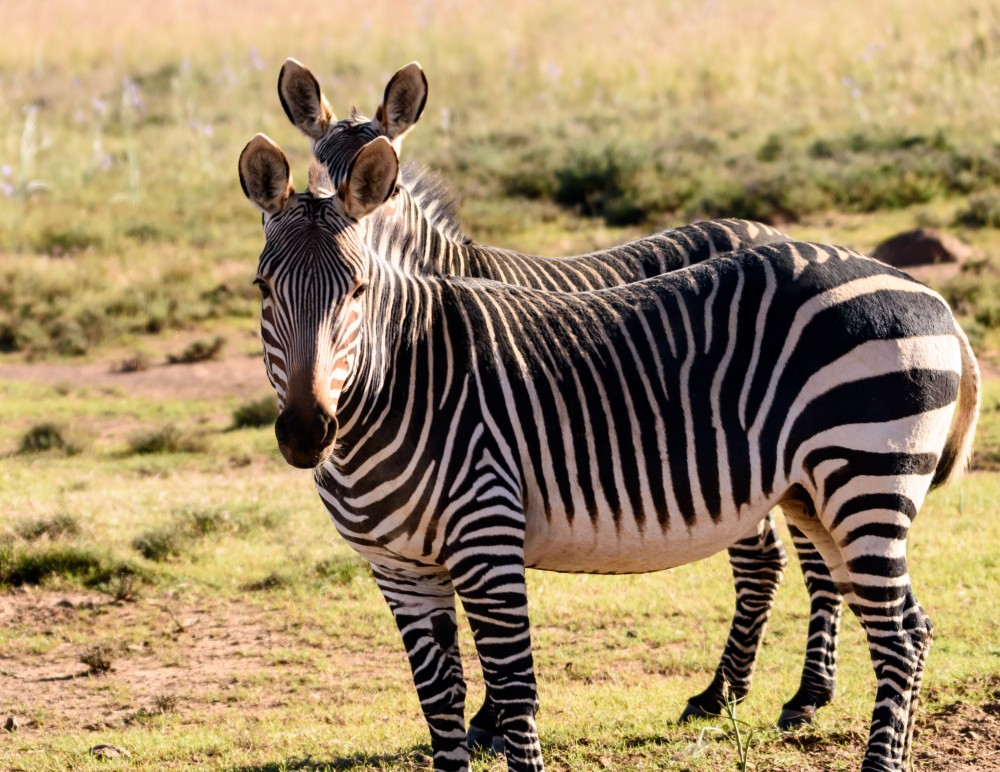 Expert Rating Reviews >> Mountain Zebra National Park – Travel Guide, Map & More!